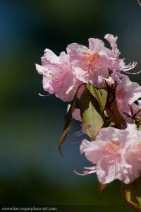 Spring Blooms - 2010