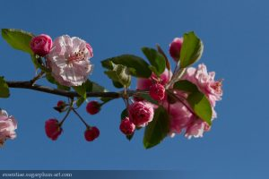 Spring Blooms - 2013