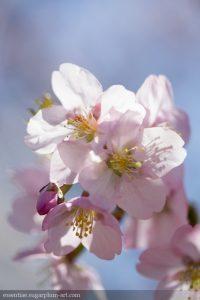 Spring Blooms - 2014