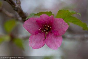 Spring Blooms - 2015