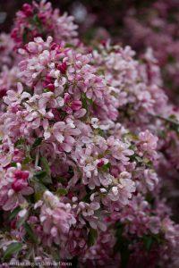 Spring Blooms - 2016