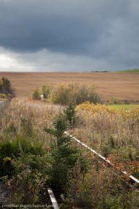 Landscape - 2011