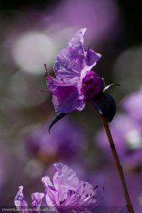 Couleurs florales - 2011