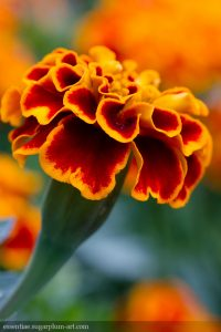 Floral colors - 2013