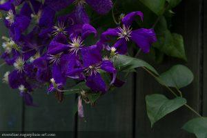 Couleurs florales - 2014