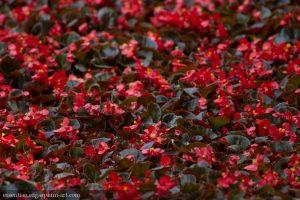 Floral colors - 2015
