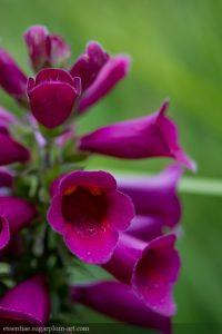 Couleurs florales - 2015