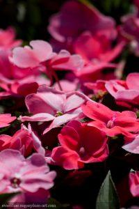 Floral colors - 2016