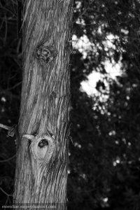 Trees - 2010