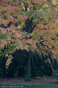 Trees - 2012