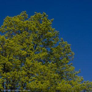 Trees - 2013
