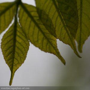 Leaf Lines - 2011
