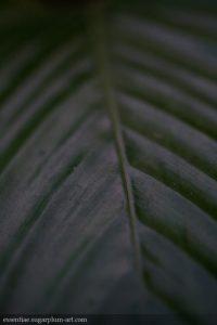 Leaf Lines - 2012