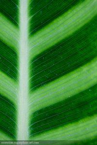 Leaf Lines - 2013