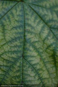 Leaf Lines - 2014