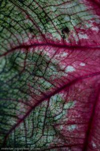 Leaf Lines - 2015