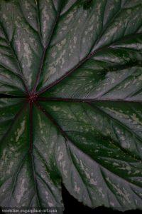 Leaf Lines - 2016