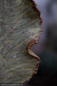 Leaf Lines - 2018