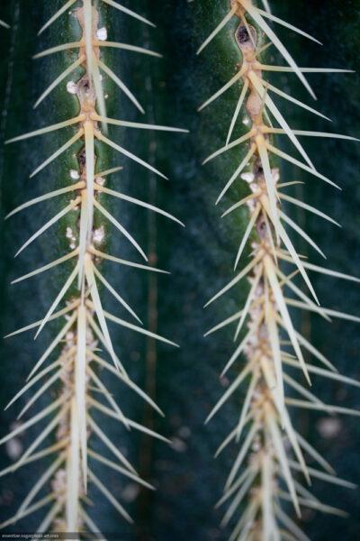 Cactus - 2012