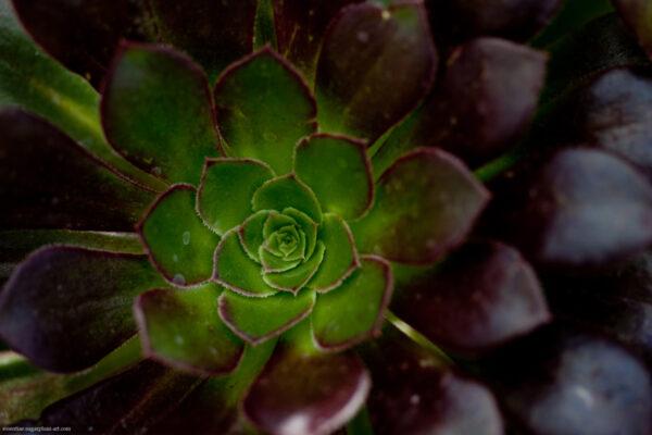 Cactus - 2013