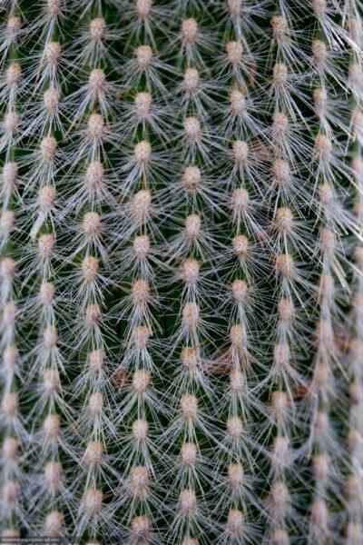 Cactus - 2014
