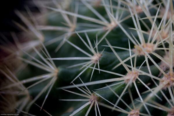 Cactus - 2015