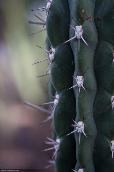 Cactus - 2016