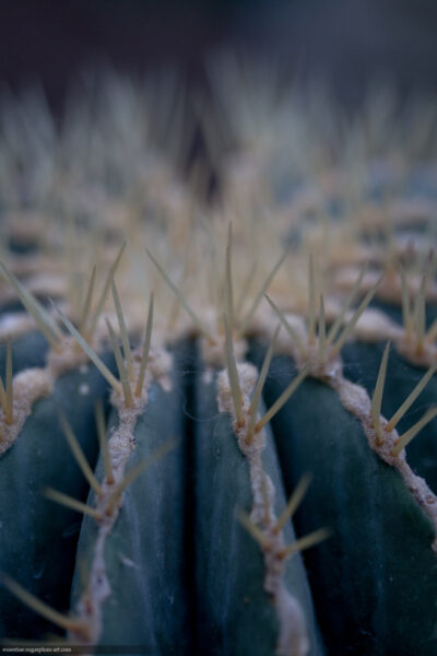Cactus - 2017