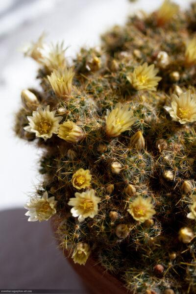 Cactus - 2018