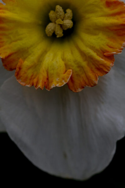 Fleurs - 2015
