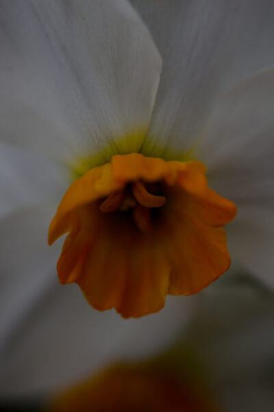 Fleurs - 2016