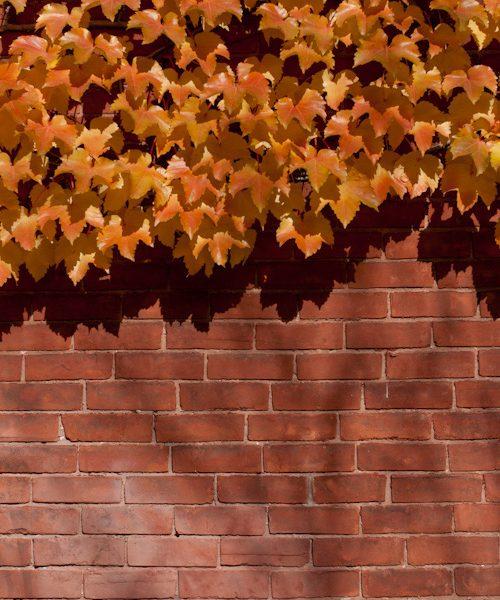 Ruelles d'automne