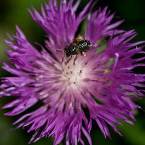 Mandala avec abeille