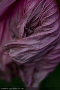 Hibiscus - 2015