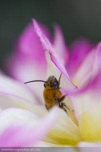 Bee - 2016