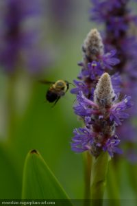 Bumblebee - 2017