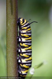 Caterpillar - 2018