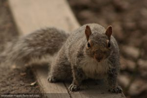 Squirrel - 2007