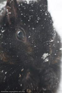 Squirrel - 2008