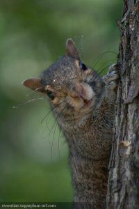 Squirrel - 2010