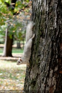 Squirrel - 2012
