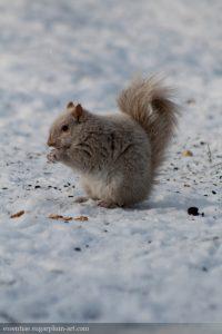 Squirrel - 2013