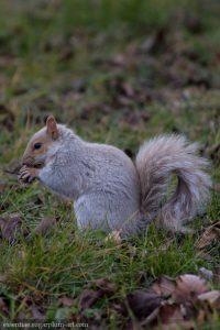 Squirrel - 2015