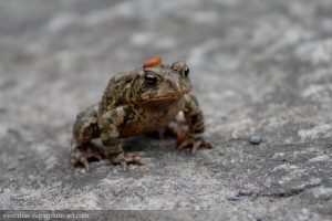 Toad - 2010