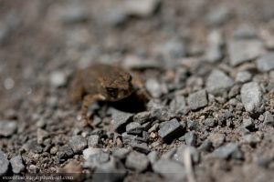 Toad - 2011