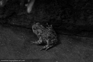 Toad - 2015