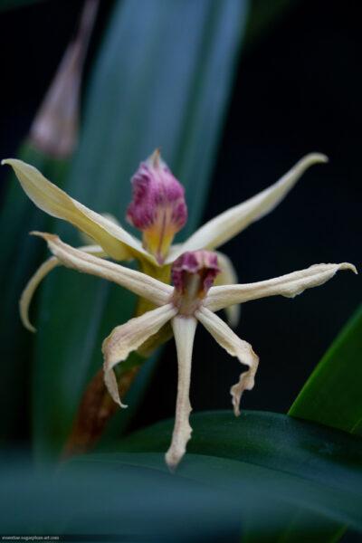 Orchidée - 2019