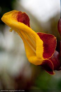 Orchidée - 2009