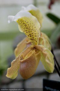 Orchidée - 2010