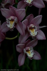 Orchidée - 2011